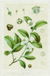 fleurdethe